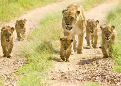 På familievenlig safari i Tanzania