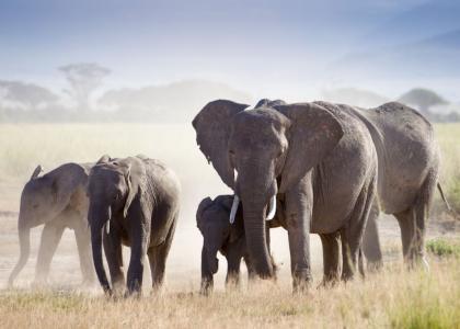 Der er rigtig mange elefanter i Tarangire National Park
