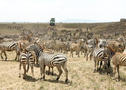 På safari i Tanzania kommer du helt tæt på dyrene