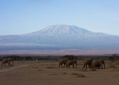 Elefanter foran Kilimanjaro