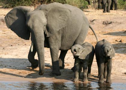 En elefantfamilie har også glæde af Ndutu søen