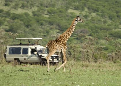 Privat safari i Tanzania