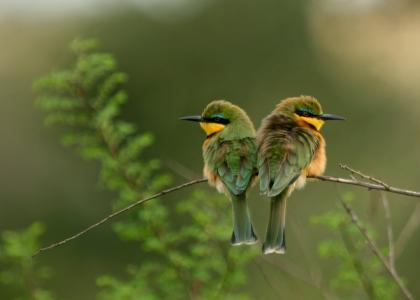 Tarangire er også et rigtig godt sted at se fugle