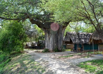 Tarangire Safari Lodge - den bedste lodge i Tarangire